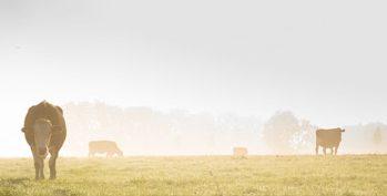 Precision Pastoral Management System